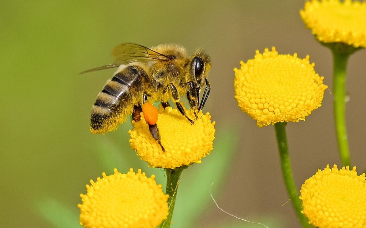 Flowering plants: the important pollination zones
