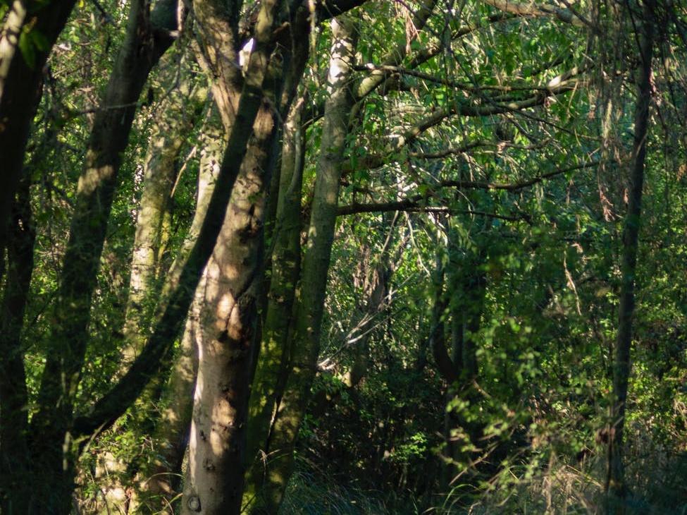 Healthy forest plantation