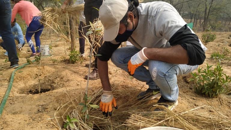 Mulching and its benefits